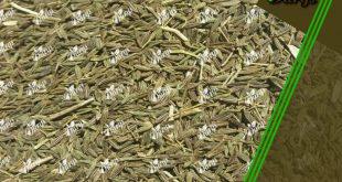 خرید عمده زیره سبز کرمان
